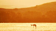 Namibia - A Destination of Contrasting Beauty