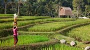 Discover Bali with the Brand New 'Exquisite Bali Experience' Package