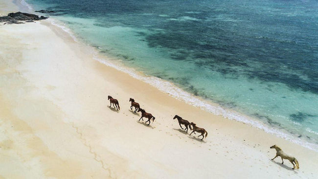 Turtle Island Horses on Beach