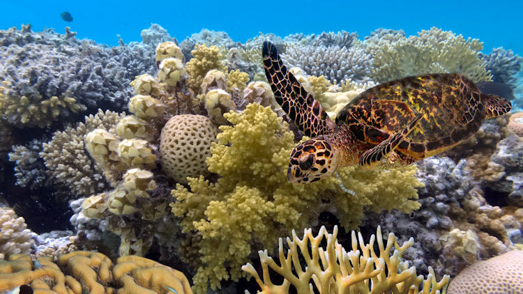 wildlife escapes Australia barrier reef turtle
