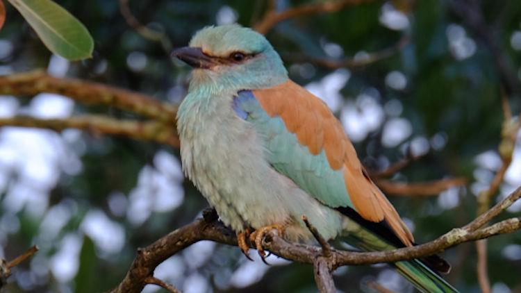 Dulini River lodge bird