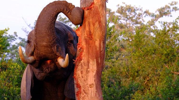 Dulini River lodge elephant