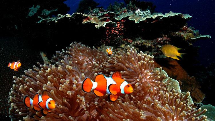 Pimalai diving