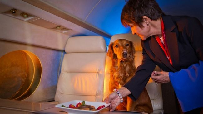 Jet Set Pet Inflight Luxury Goes To The Dogs